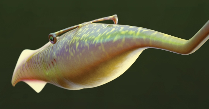 Close-up Tully Monster (image for press release)